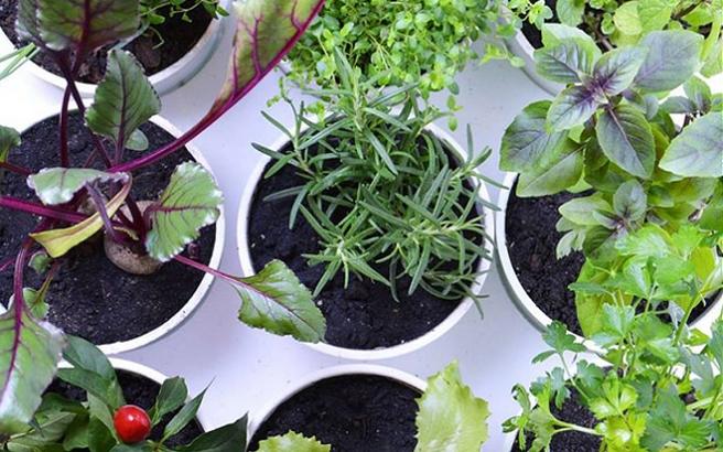 Plantário