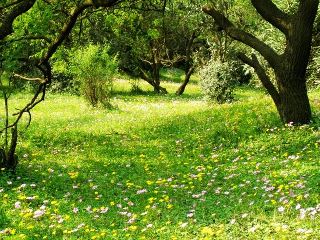 bosque ecoparque uruguay