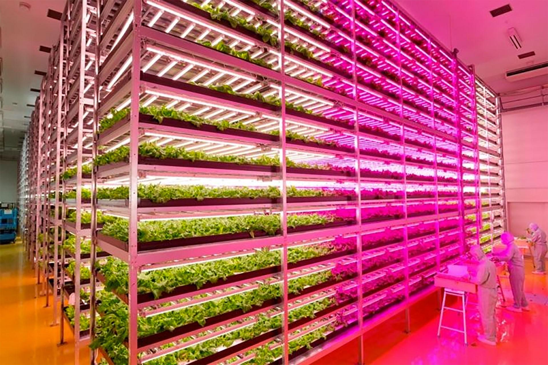 Resultado de imagem para Fazenda vertical produz alface