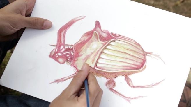 zebu-tintasorganicas